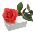 Scarlet rose and silver box — Stock Photo