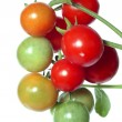 图库照片: Red tomatoes on white background