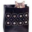 Furry grey cat in gift paper bag - Stock Photo