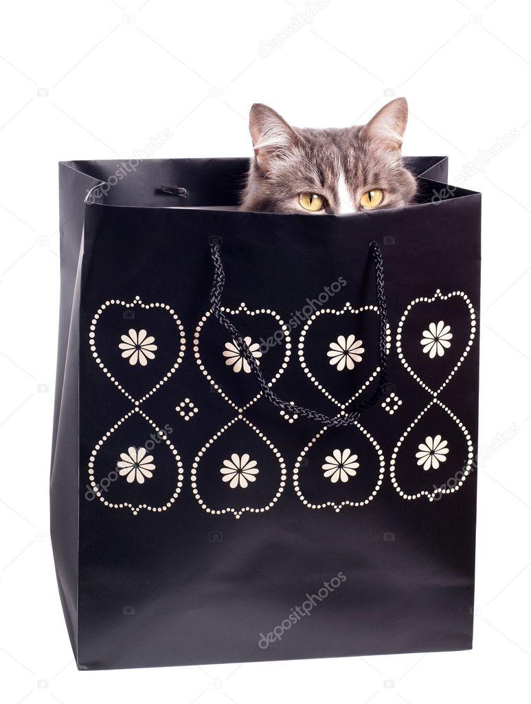 fourrure chat gris en sac de papier cadeau photographie ravnodenstvie 1336859. Black Bedroom Furniture Sets. Home Design Ideas