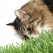 Cat in the grass — Stock fotografie