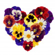 Heart from various flowers on white back - Stock Photo