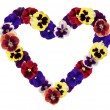 Heart from pansy on white background — Stock Photo