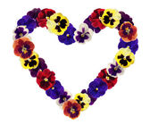 Heart from pansy on white background — Foto Stock