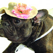 Stock Photo: Dog in hat with flower