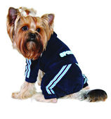 Dog in blue sport suit — Stock Photo
