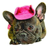 Dog in pink cowboy hat — Stock Photo
