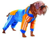 Dog in blue suit — Stock Photo