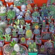 Stock Photo: Cacti