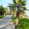 Stock Photo: Palm alley near beach