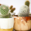 Blurry cacti — Photo