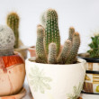 Blurry cacti — Stock fotografie