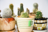 Blurry cacti — Stock Photo