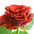Royalty-Free Stock Photo: Red rose on the white