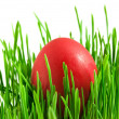 Red easter eggs in green grass with whit - Stock Photo