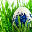 Easter eggs in green grass with white ba — Stok fotoğraf