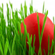 Red easter eggs in green grass with whit — Stock Photo