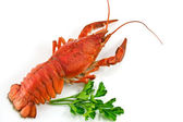 Lobster with Green parsley isolated on w — Stock Photo
