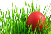 Red easter eggs in green grass with whit — Stok fotoğraf