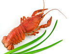 Lobster with Green onion isolated on whi — Stock Photo