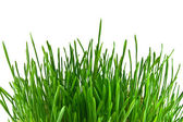 Isolated green grass on white background — Stock Photo