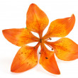 Stock Photo: Orange lily isolated on white background