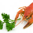 Lobster — Stock Photo #1263179