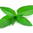 Fresh-picked mint leaves — Stock Photo #1264208