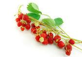 Strawberry isolated on white background — Stock Photo