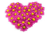 Pink flowers in a shape of a heart — Stock Photo