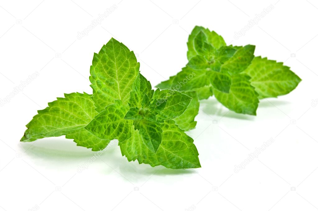 Fresh-picked mint leaves  Stock Photo #1434694