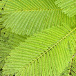 Fern — Stock Photo #1319164