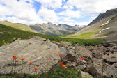 Rocks, sky and siberian globeflower — Stock Photo