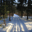 Winter landscape — Stockfoto #1484193