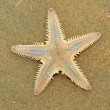 Stock Photo: Sea-star