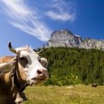 Alpe Veglia mountain pasture — Stock Photo #1235361