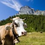 Alpe Veglia mountain pasture — Stock Photo #1235409