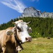 Alpe Veglimountain pasture — Stock Photo #1235409