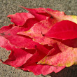 Four red leaves — Stock Photo