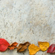 Royalty-Free Stock Photo: Fall leaves frame on grey