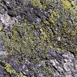Lichen rock texture - Stock Photo