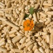 Wood pellets and flower — Stock Photo #1236745
