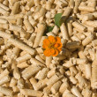 Royalty-Free Stock Photo: Wood pellets and flower