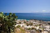 Mediterranean sea and Opuntia — Stock Photo