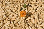 Wood pellets and flower — Stock Photo