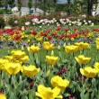 Yellow and red tulips — Stock Photo #1254357