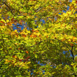 Green golden foliage — Stock Photo
