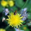 Insect on a flower — Stock Photo