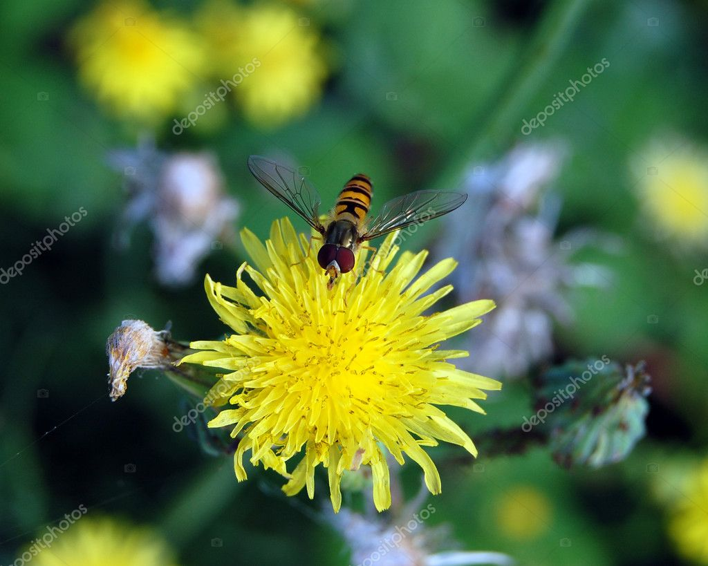 Insect on a yellow flower — Stock Photo #1228635