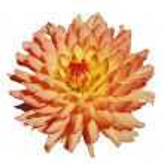 Flower — Stock Photo #1243660